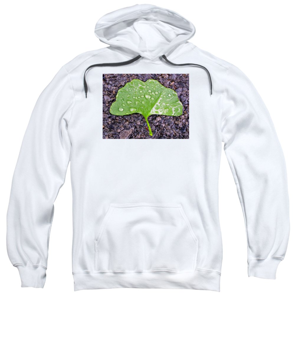 Ginkgo Sweatshirt featuring the photograph Ginkgo Leaf by Ted M Tubbs
