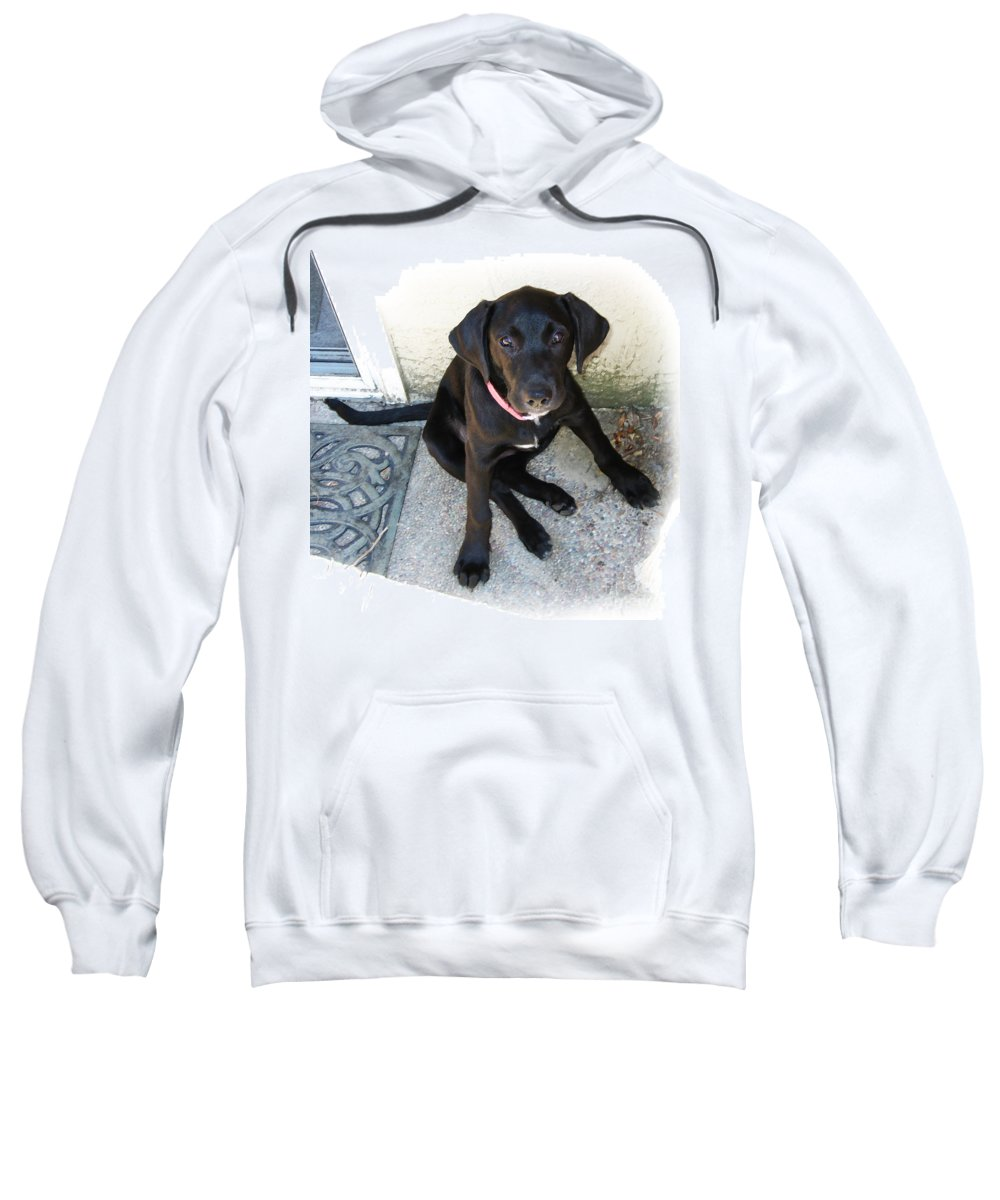 Dog Sweatshirt featuring the photograph Good Puppy by Rhonda Chase