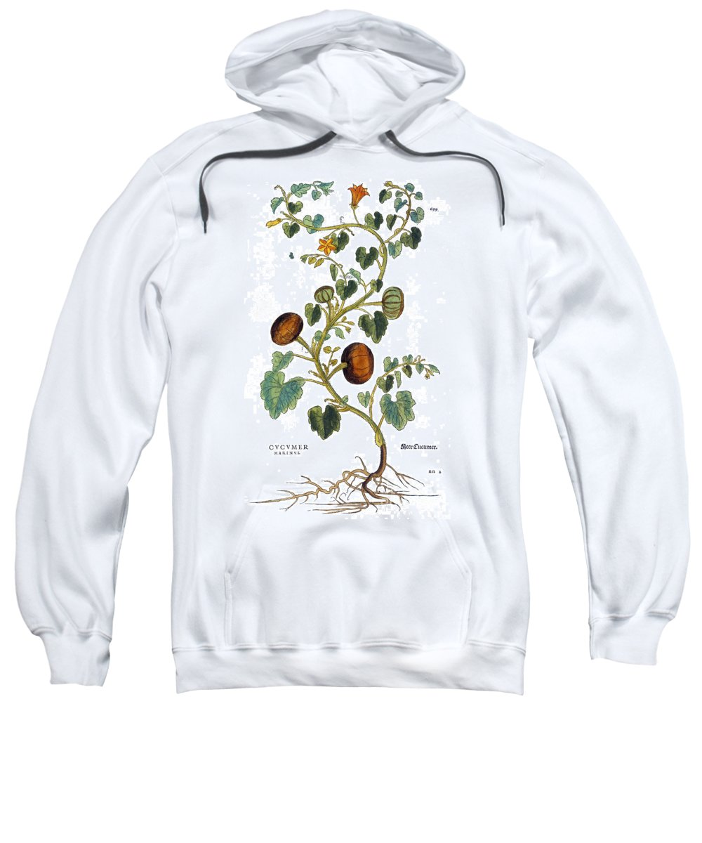 1730s Sweatshirt featuring the photograph Gourd, 1735 by Granger
