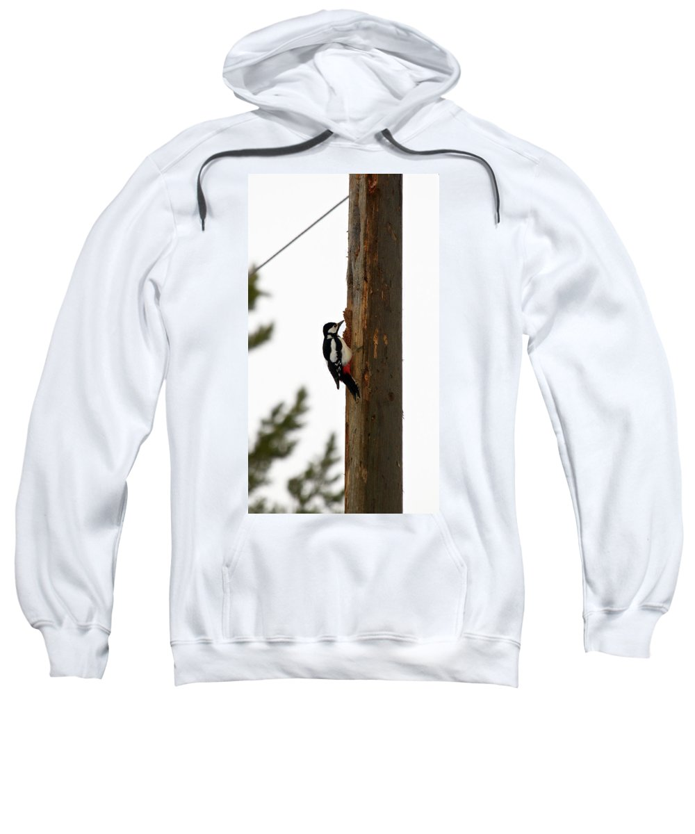 Lehtokukka Sweatshirt featuring the photograph Great Spotted Woodpecker by Jouko Lehto