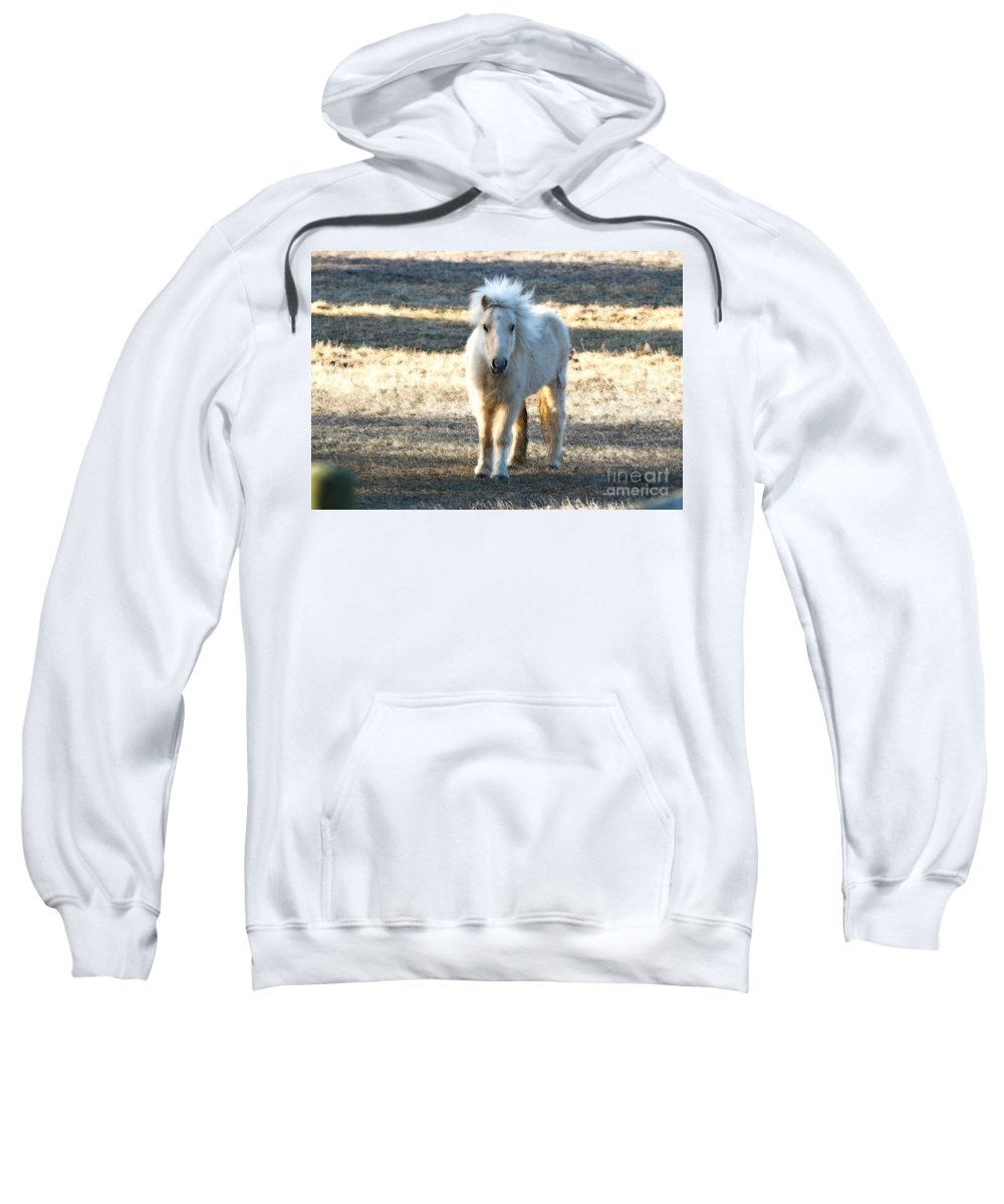 Miniature Horse Sweatshirt featuring the photograph Greetings From A Hobbit Horse by Angela Koehler