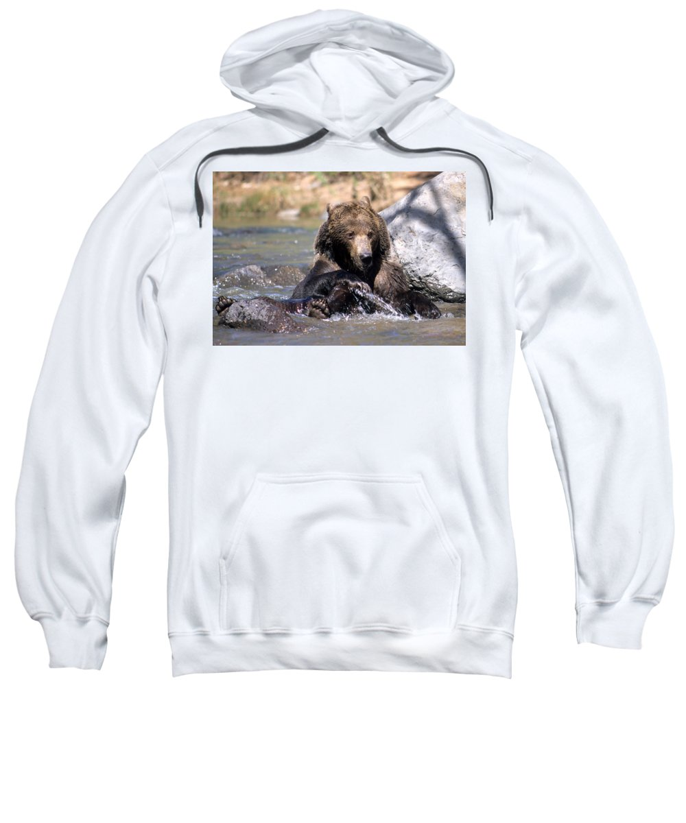 Wildlife Sweatshirt featuring the photograph Grizzly Bear Plays In Water by Larry Allan