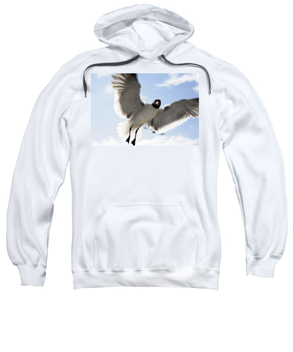 Seagull Sweatshirt featuring the photograph Gull In Flight by Marilyn Hunt