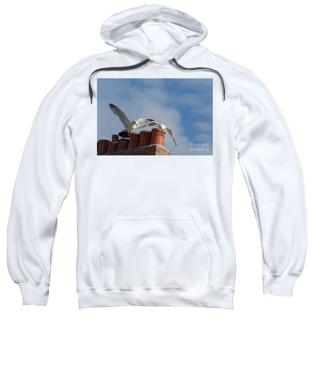 Cornwall Sweatshirt featuring the photograph Gulls by Philip Pound