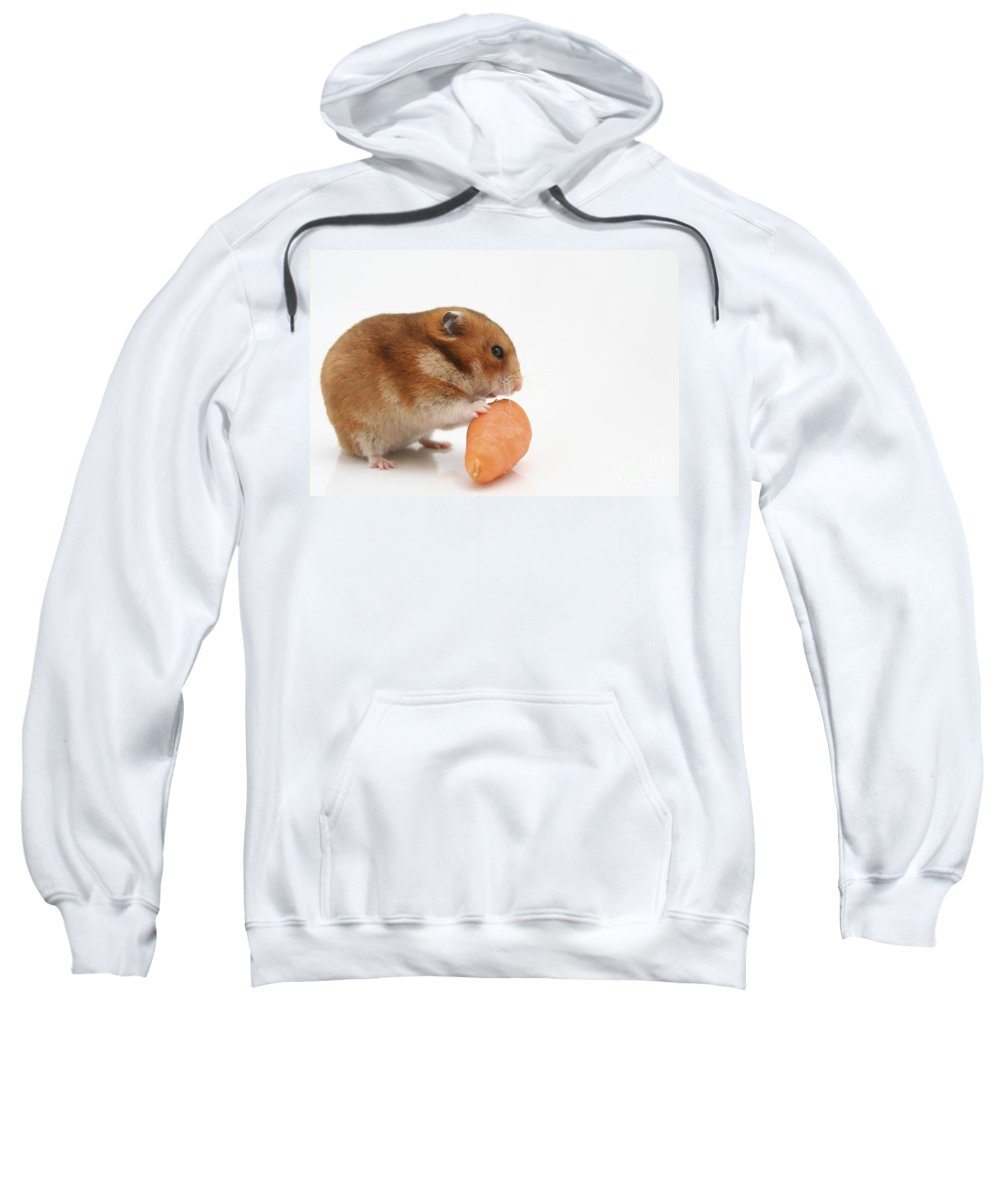 Hamster Sweatshirt featuring the photograph Hamster Eating A Carrot by Yedidya yos mizrachi
