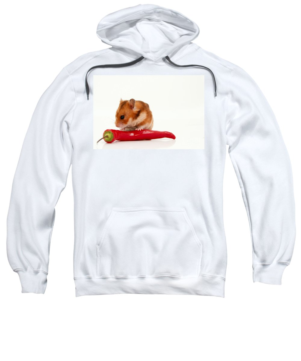 Hamster Sweatshirt featuring the photograph Hamster Eating A Red Hot Pepper by Yedidya yos mizrachi