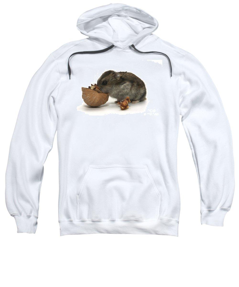 Hamster Sweatshirt featuring the photograph Hamster Eating A Walnut by Yedidya yos mizrachi