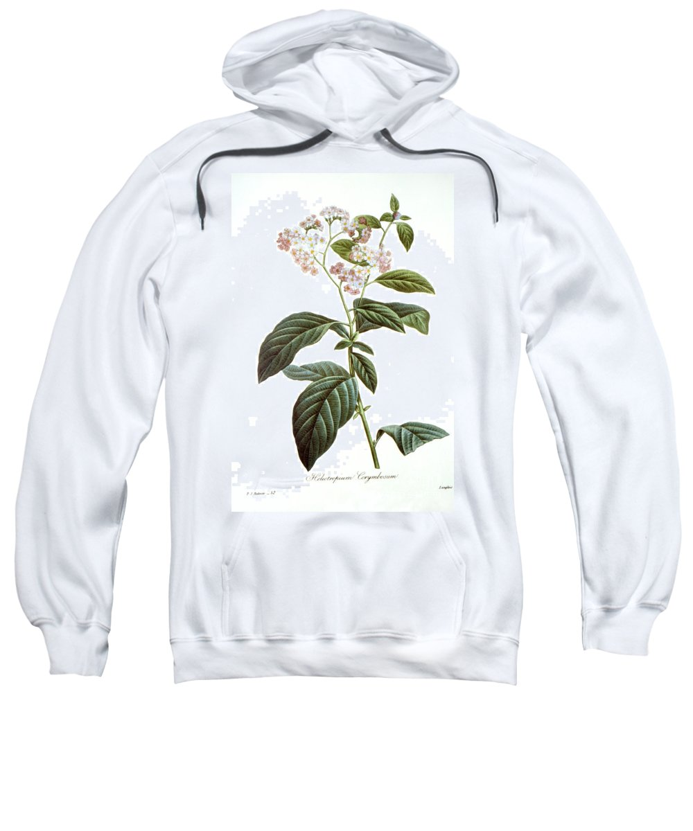 Biology Sweatshirt featuring the photograph Heliotrope by Granger