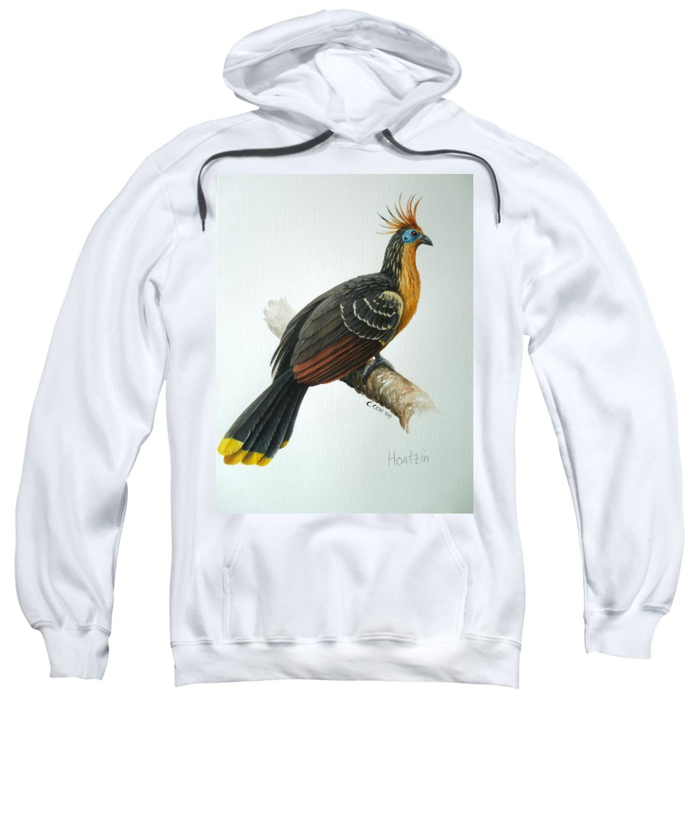 Hoatzin Sweatshirt featuring the painting Hoatzin by Christopher Cox