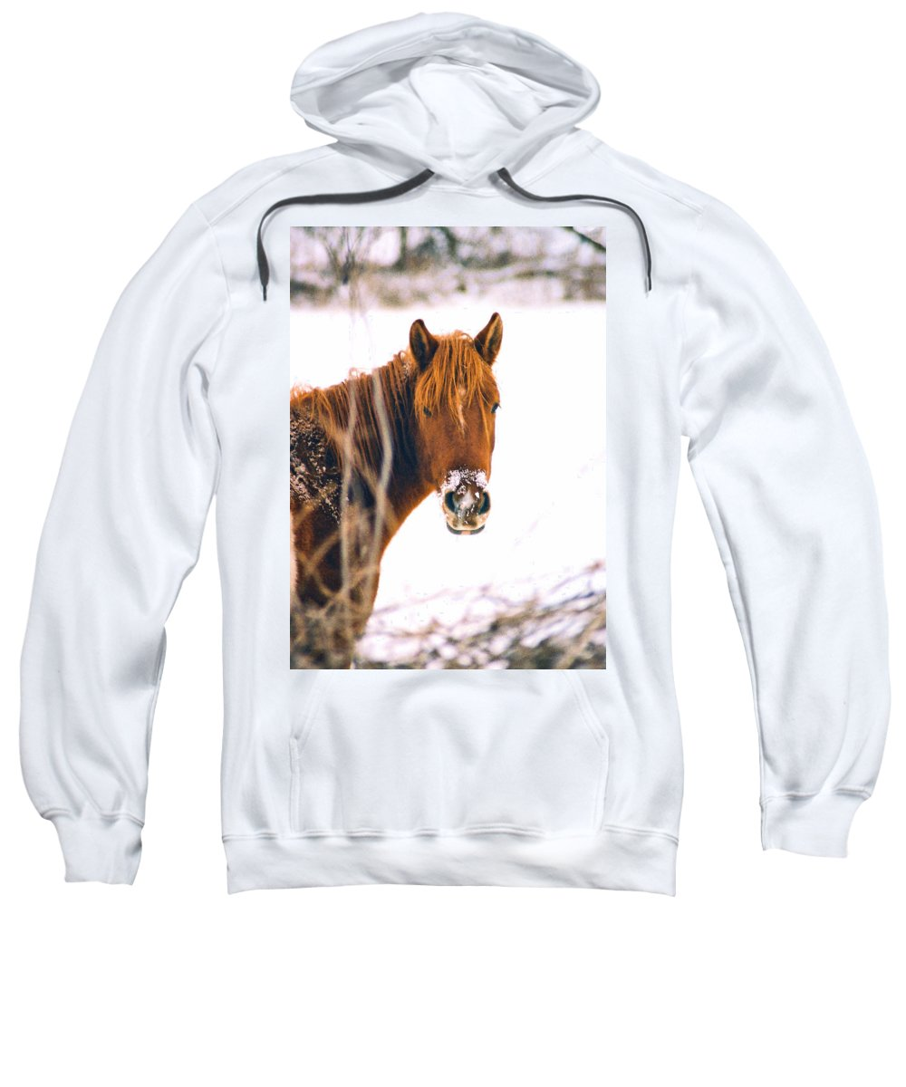Horse Sweatshirt featuring the photograph Horse In Winter by Steve Karol