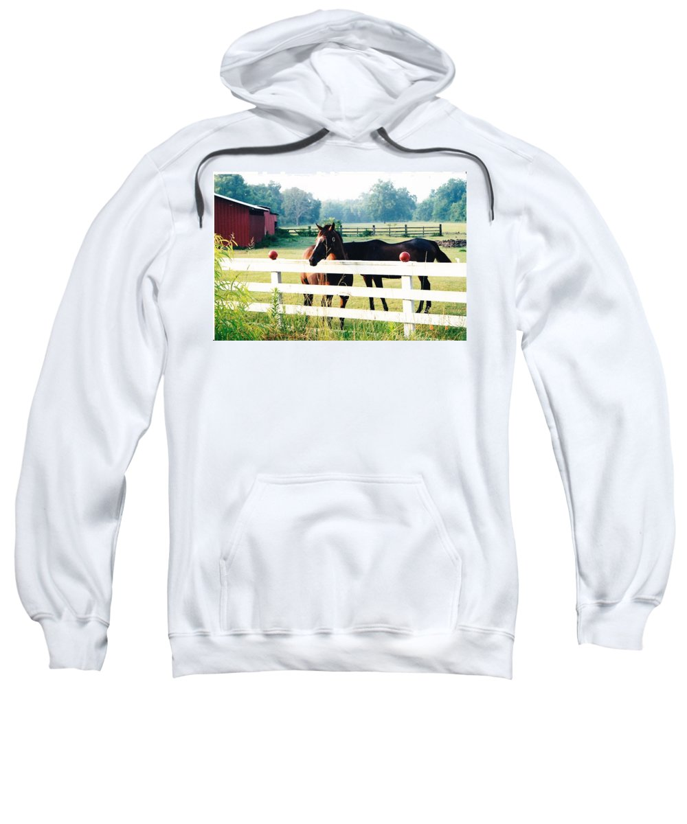 Horses Sweatshirt featuring the photograph Horse Stable by Michelle Powell