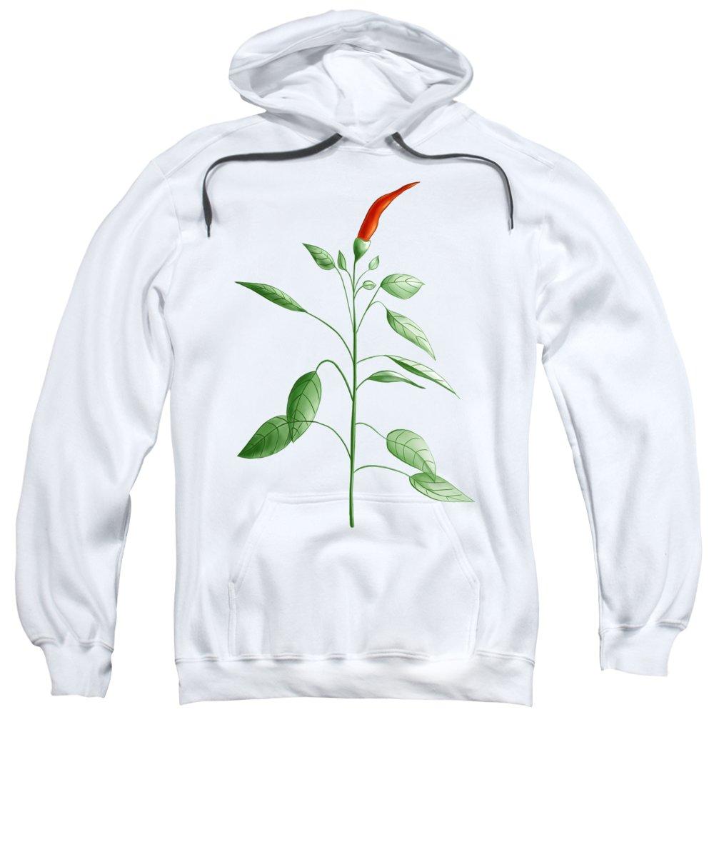 Chili Sweatshirt featuring the digital art Hot Chili Pepper Plant Botanical Illustration by Boriana Giormova
