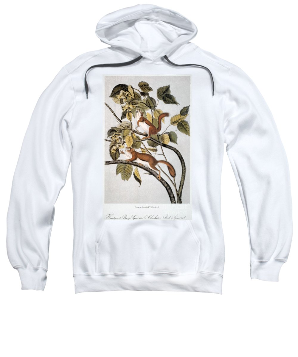 1846 Sweatshirt featuring the photograph Hudsons Bay Squirrel by Granger