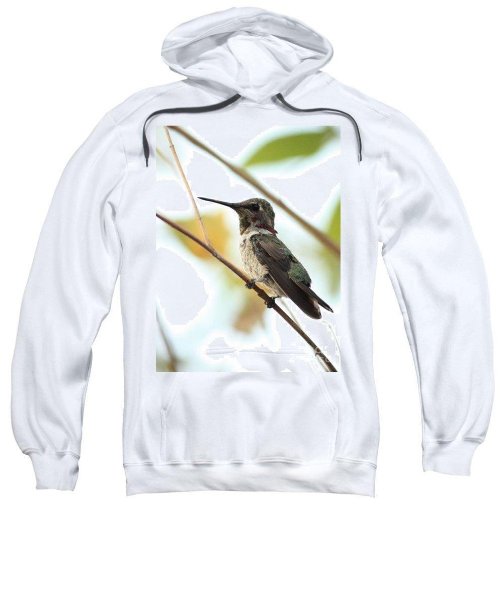 Hummingbird Sweatshirt featuring the photograph Hummingbird Between Branches by Carol Groenen