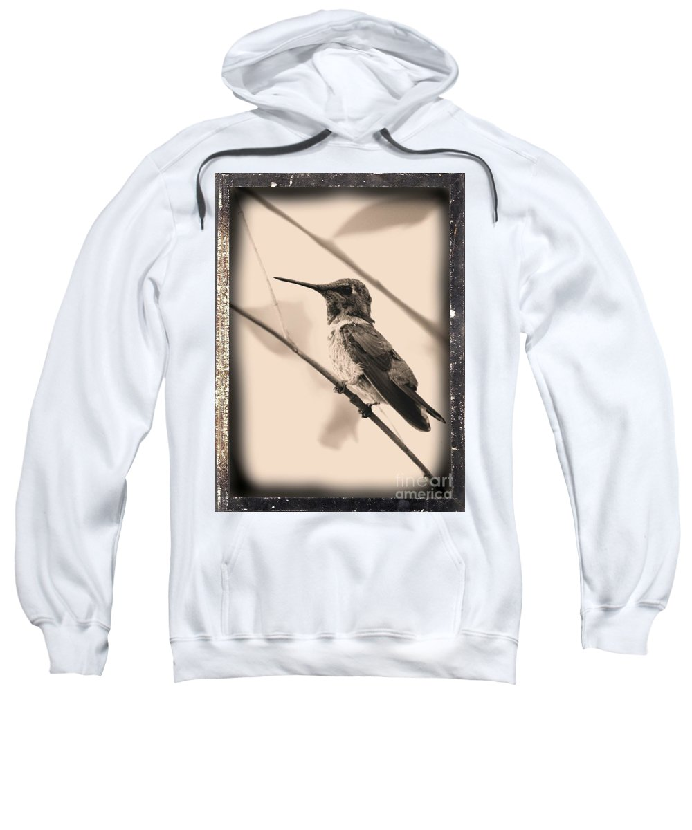 Hummingbird Sweatshirt featuring the photograph Hummingbird With Old-fashioned Frame 3 by Carol Groenen
