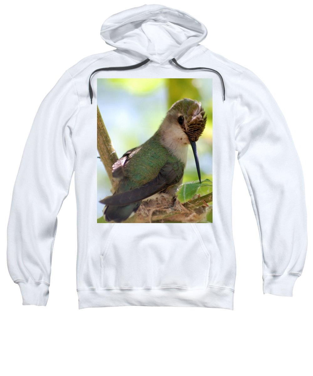 Hummingbird Sweatshirt featuring the photograph Hummingbird With Small Nest by Amy Fose