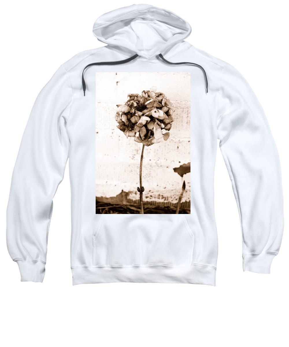 Sepia Sweatshirt featuring the photograph Hydrangea Interest by Trish Hale