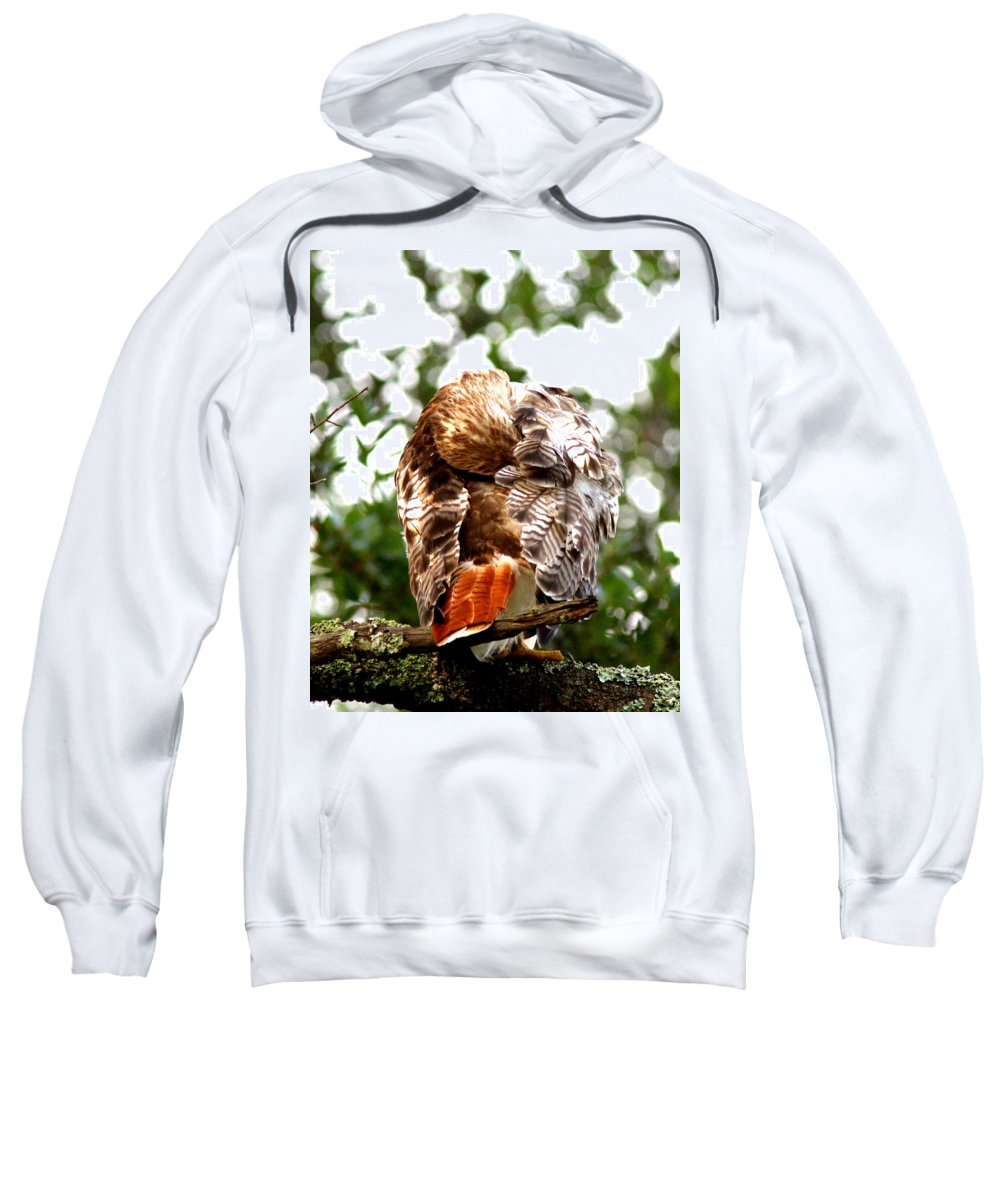 Red-tailed Hawk Sweatshirt featuring the photograph Img_1049-006 - Red-tailed Hawk by Travis Truelove