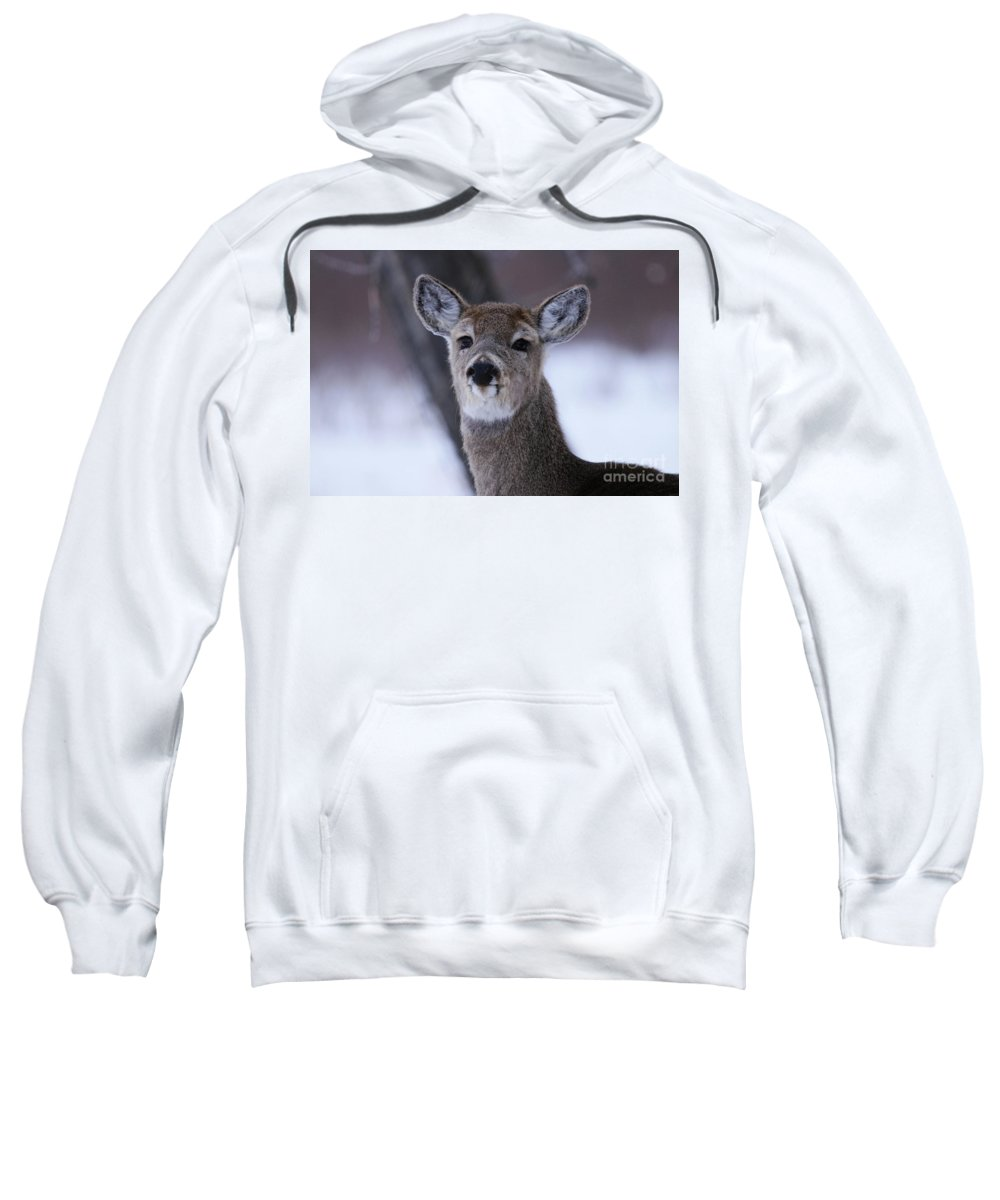 Deer Sweatshirt featuring the photograph Inquisitive Yearling by Alyce Taylor