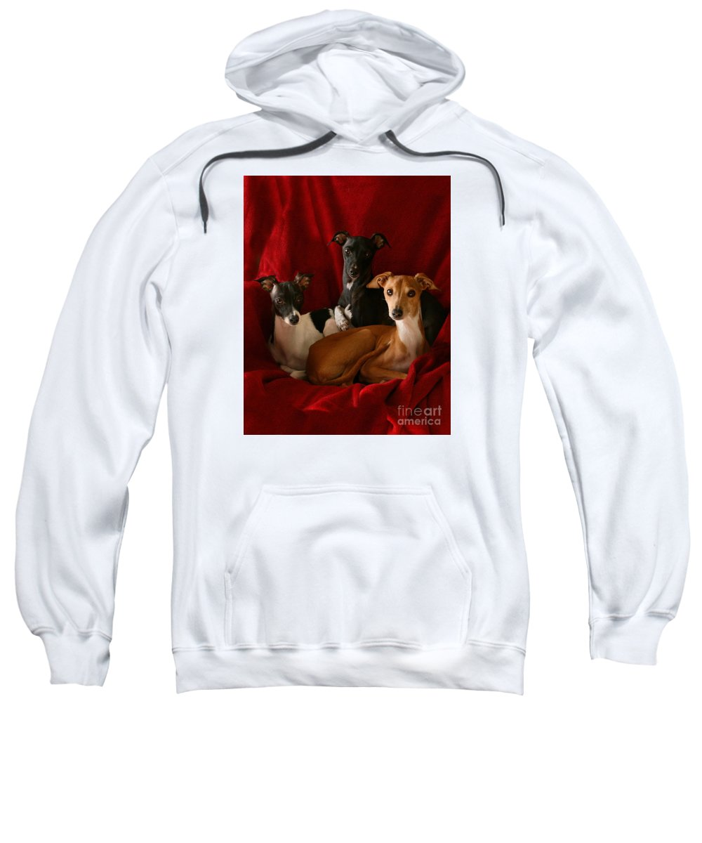 Black And White Sweatshirt featuring the photograph Italian Greyhound Trio 3 by Angela Rath