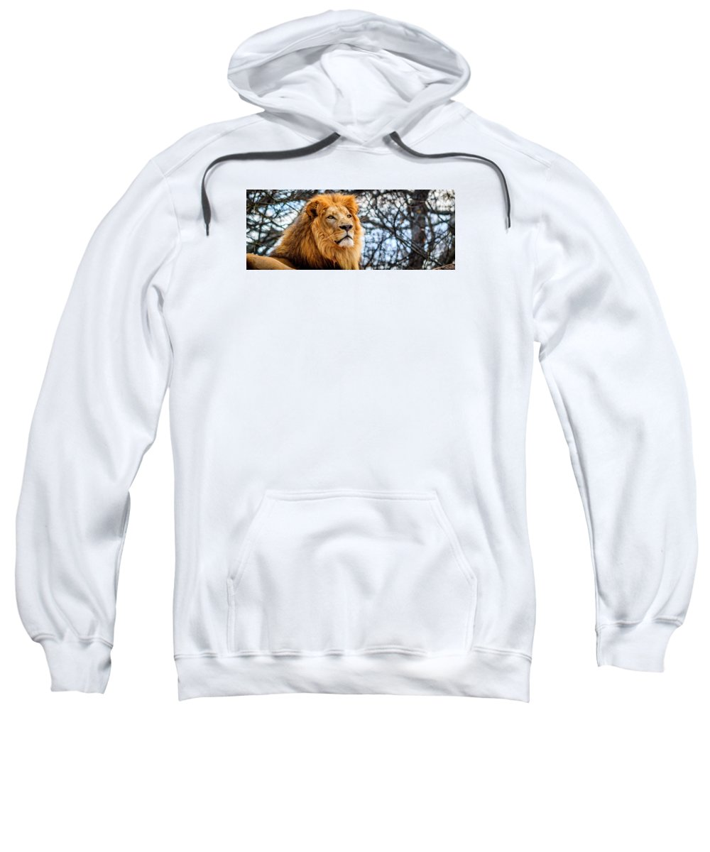 Lion Sweatshirt featuring the photograph It's Good To Be King by Liam Douglas