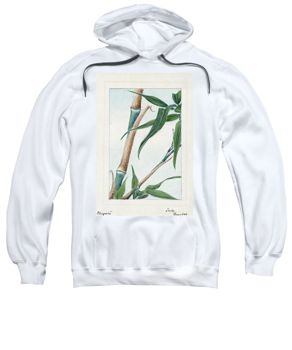 1870s Sweatshirt featuring the photograph Japan: Bamboo, C1870s by Granger