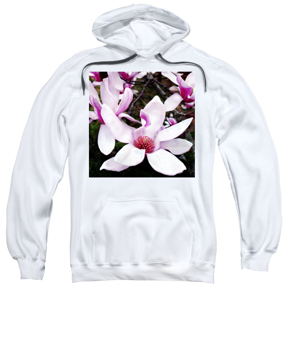 Japanese Sweatshirt featuring the photograph Japanese Magnolia by Marilyn Hunt