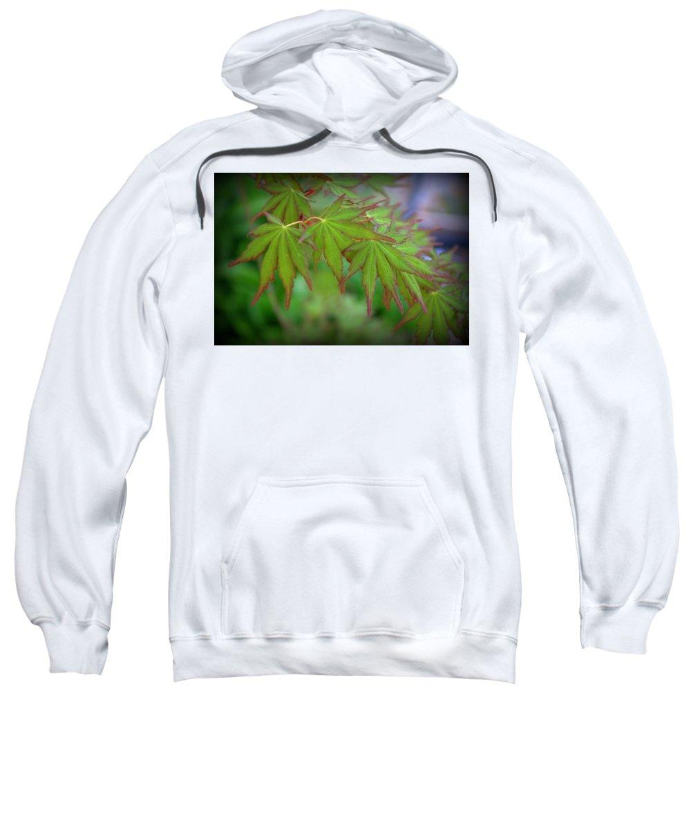 Foliage Sweatshirt featuring the photograph Japanese Maple Foliage by Nathan Abbott