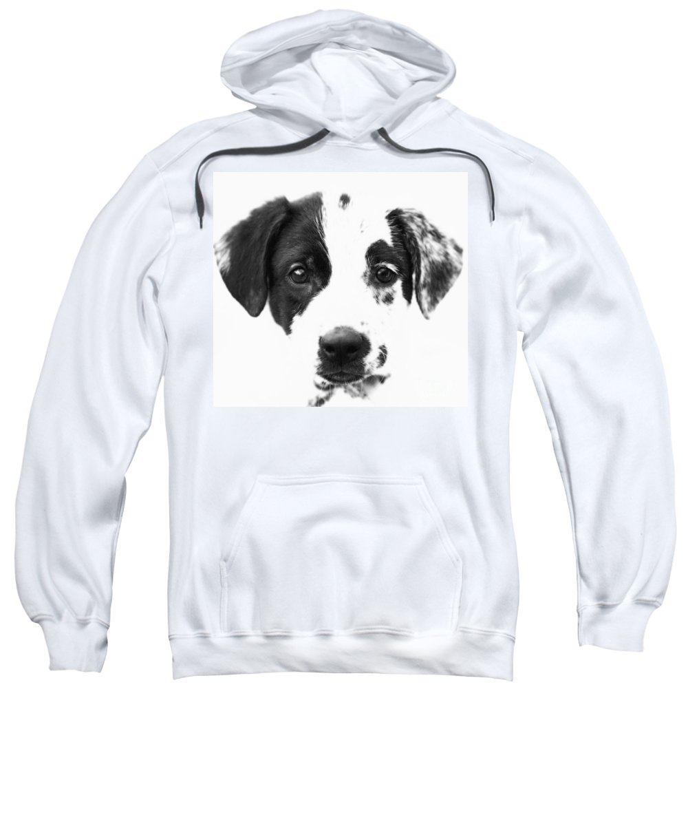 Dogs Sweatshirt featuring the photograph Karma by Amanda Barcon