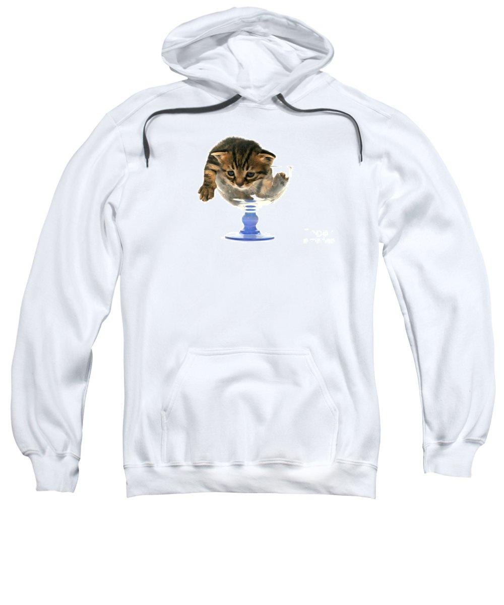 Cat Sweatshirt featuring the photograph Kitten Sits In A Glass by Yedidya yos mizrachi