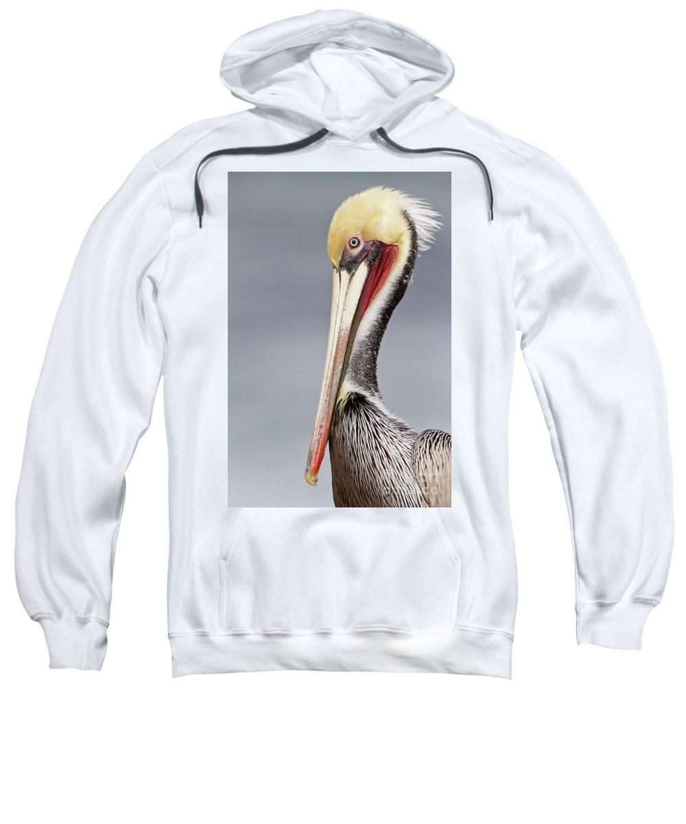 Pelican Sweatshirt featuring the photograph La Jolla Pelican by Bryan Keil