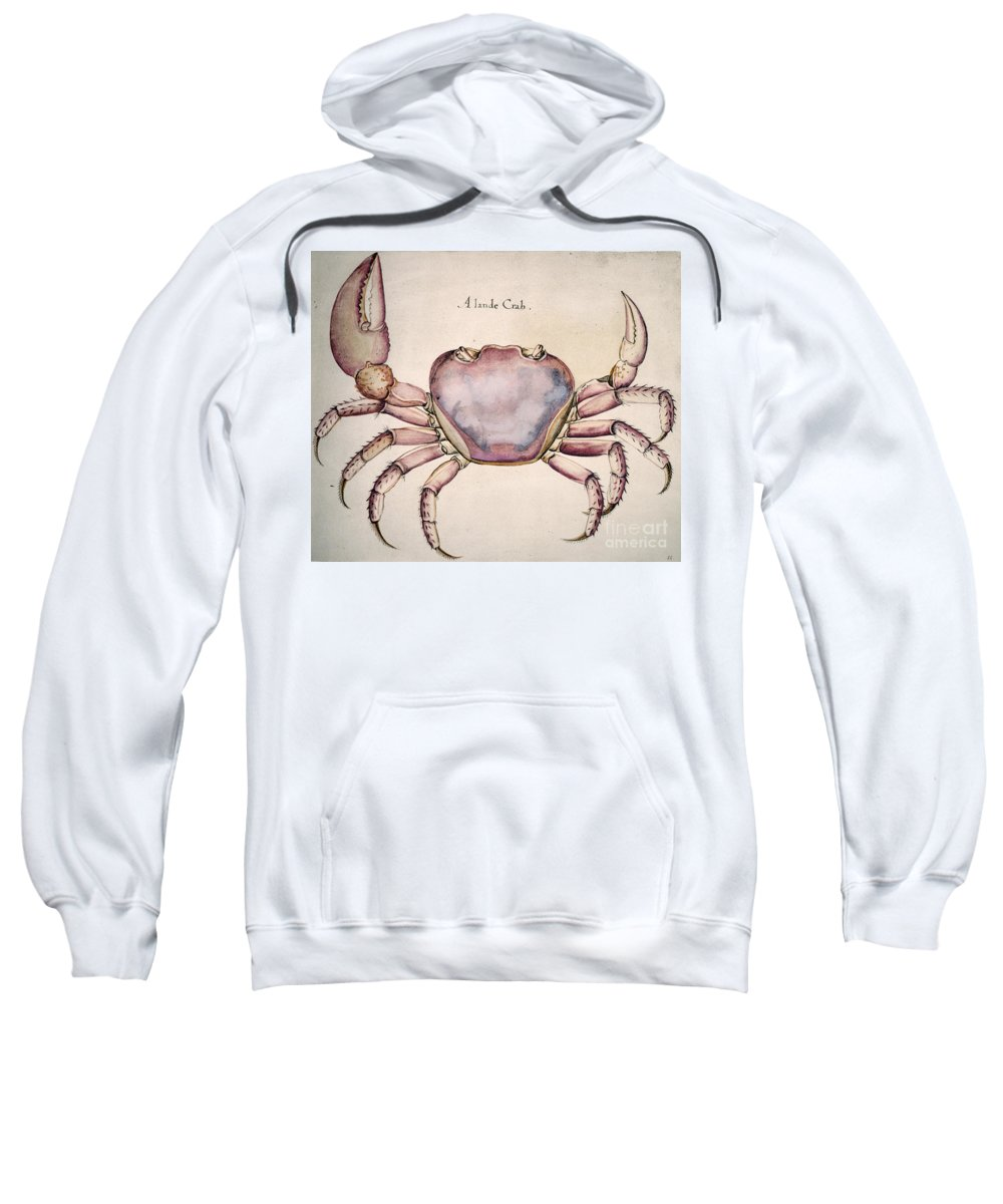 1585 Sweatshirt featuring the photograph Land Crab by Granger
