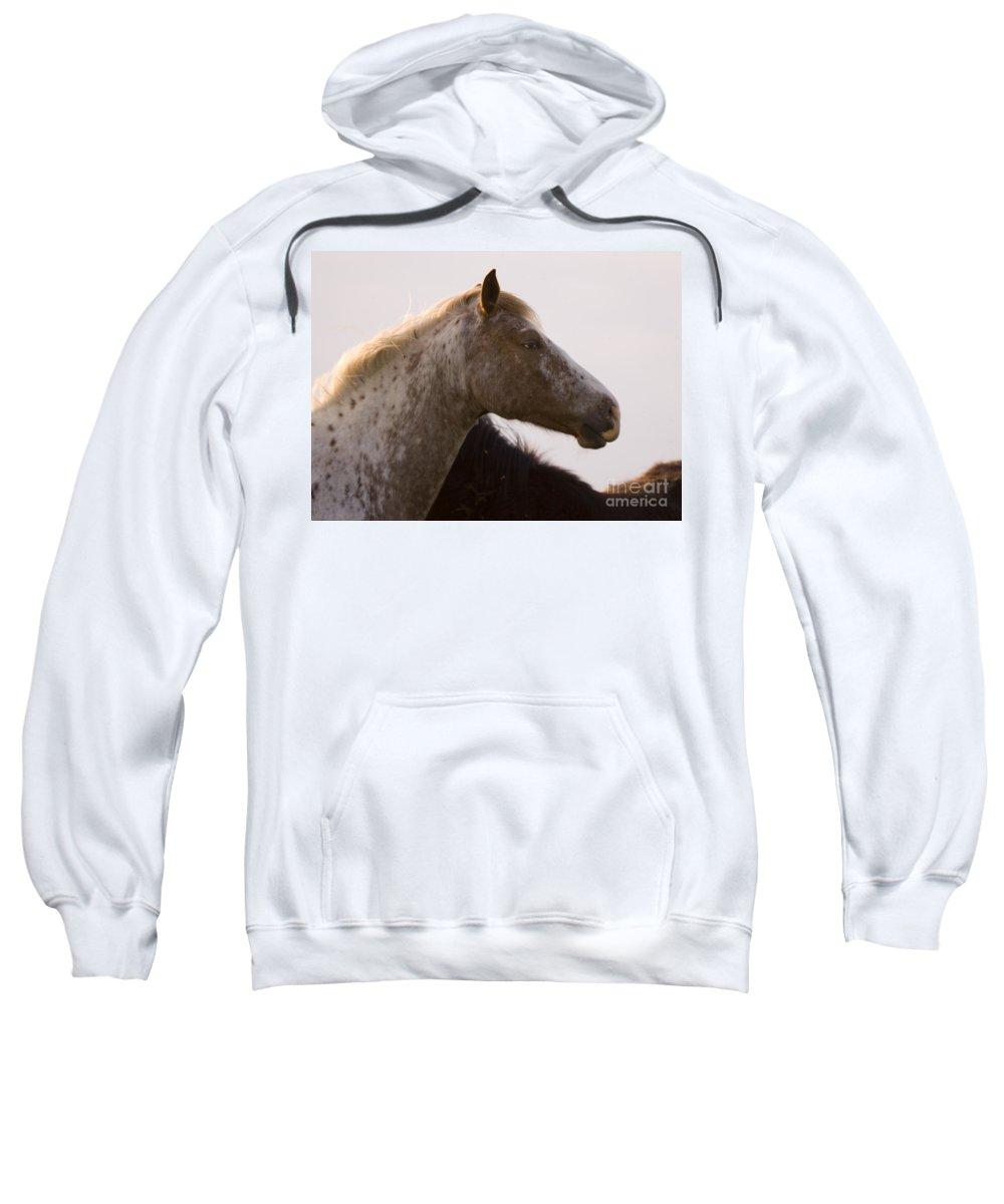 Horse Sweatshirt featuring the photograph Lazy Eye by Angel Ciesniarska