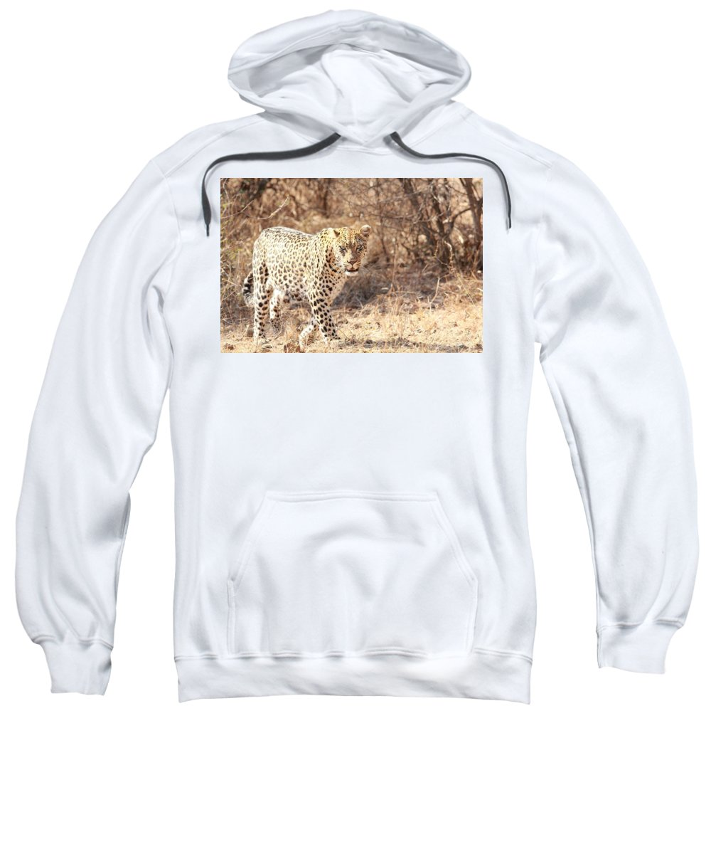 Leopard Sweatshirt featuring the photograph Leopard by Nico Cillie