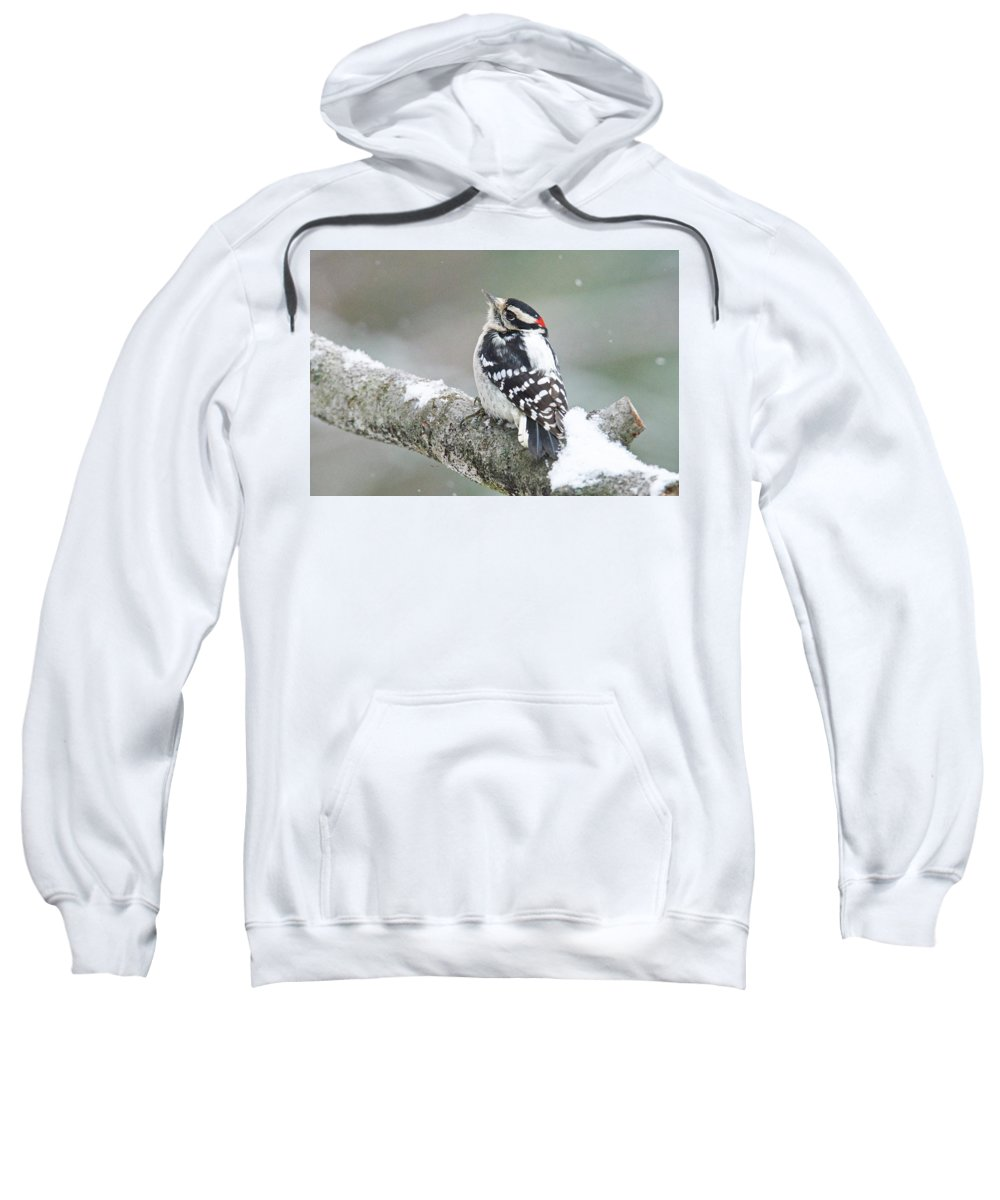 Male Sweatshirt featuring the photograph Let It Snow by Michael Peychich