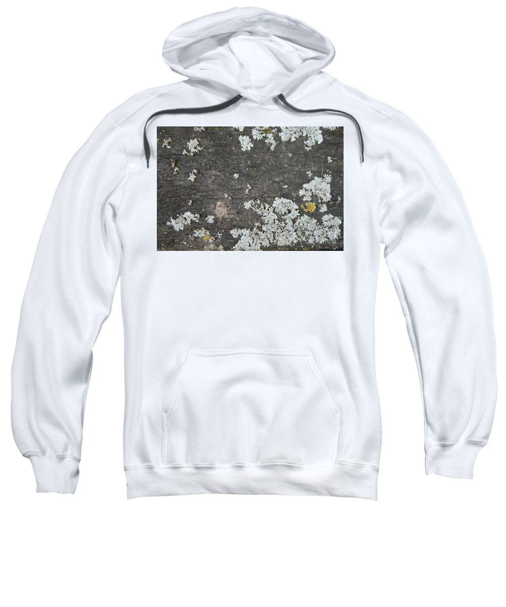 Old Wood Sweatshirt featuring the photograph Lichen On Wood by Julie Kindt
