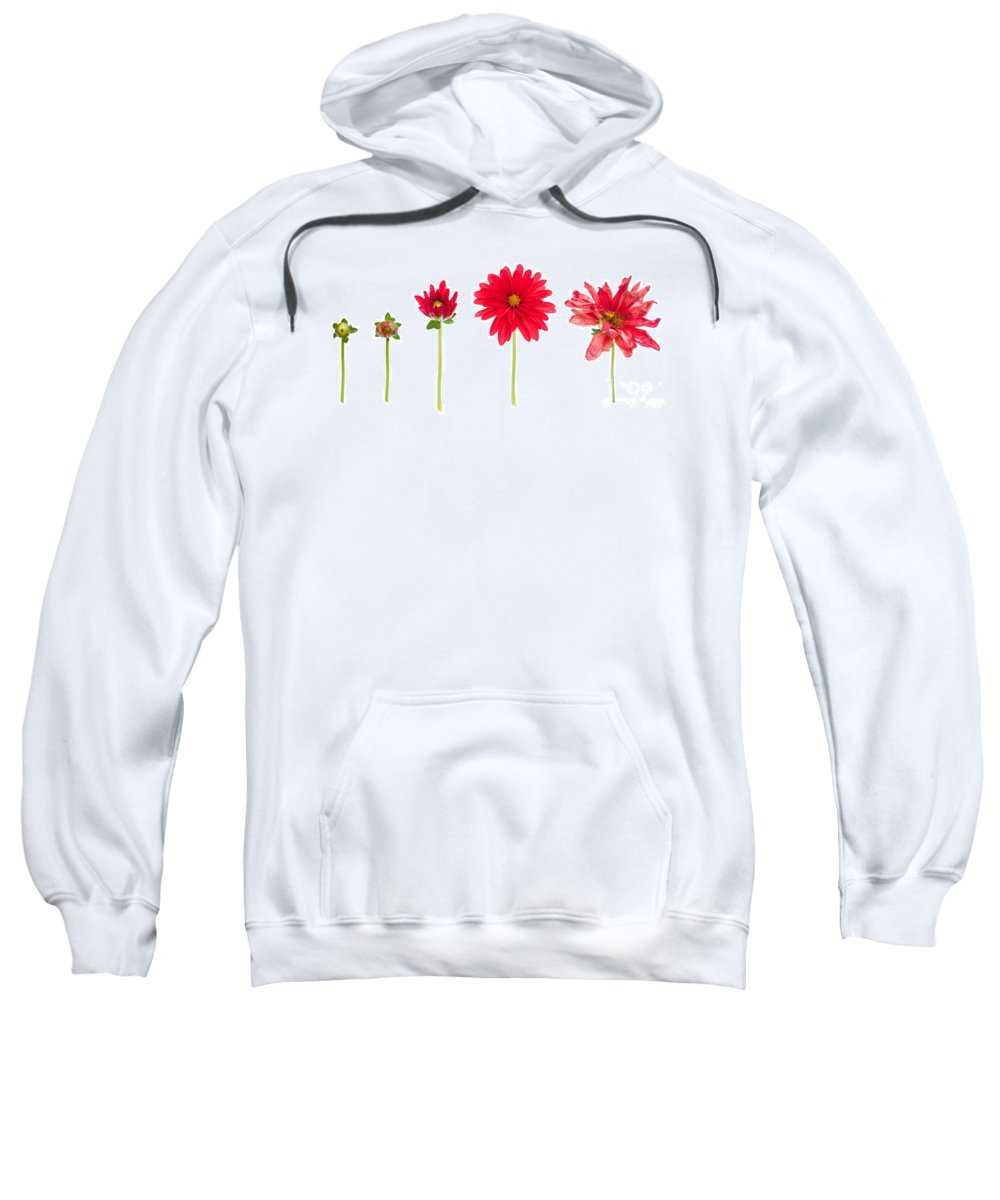 Flower Sweatshirt featuring the photograph Life And Death Of A Dahlia by Meirion Matthias