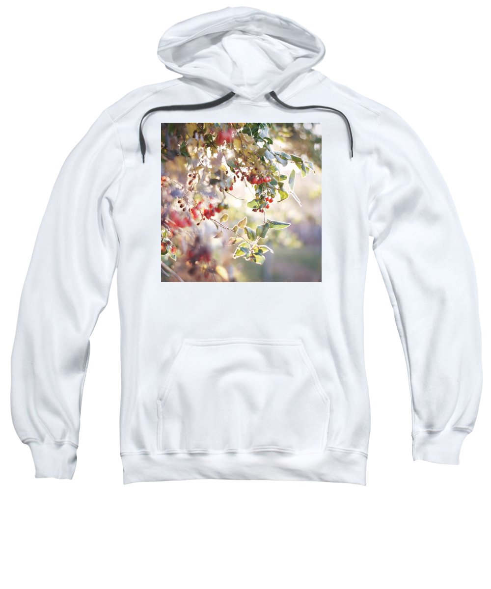 Foliage Autumn Nature Branches Tree Berries Sweatshirt featuring the photograph Lightwork by Becca Stauffer