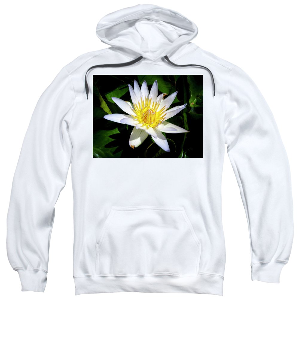 Flowers Sweatshirt featuring the photograph Lily by Daniel Murphy