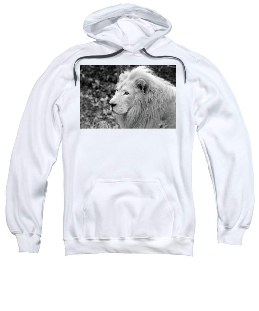 Sweatshirt featuring the photograph Lion Oh My by Michelle Stephenson