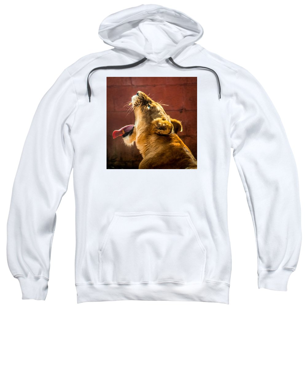 Lioness Sweatshirt featuring the photograph Lioness Yawn by Liam Douglas