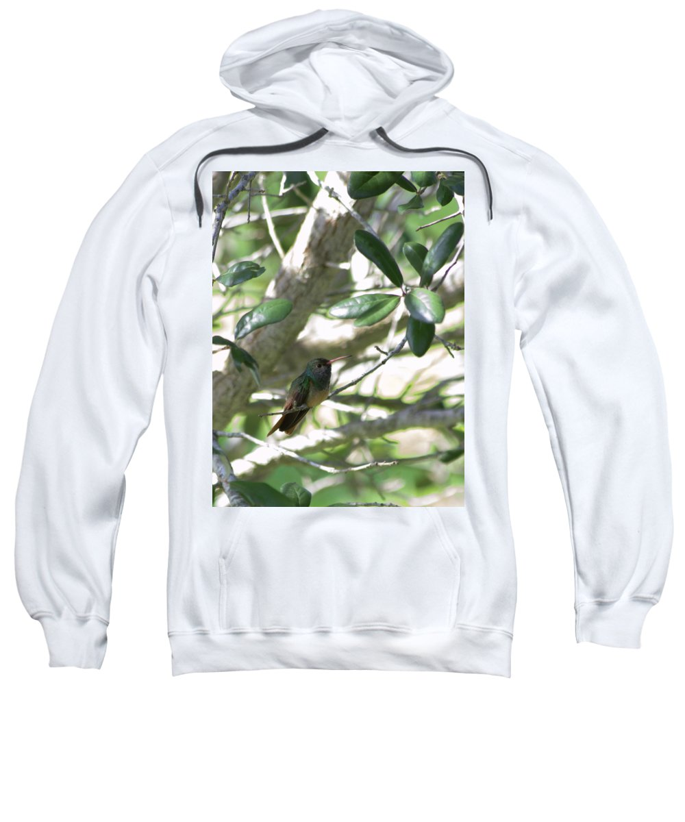 Kingsville Texas Sweatshirt featuring the photograph Little One by Marshall Barth