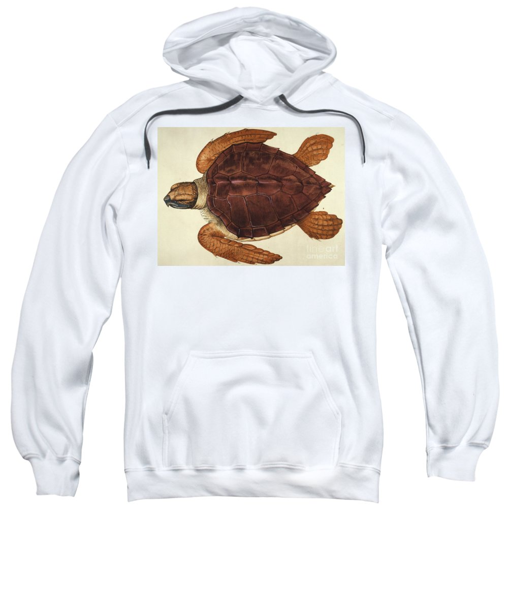 1585 Sweatshirt featuring the photograph Loggerhead Turtle, 1585 by Granger