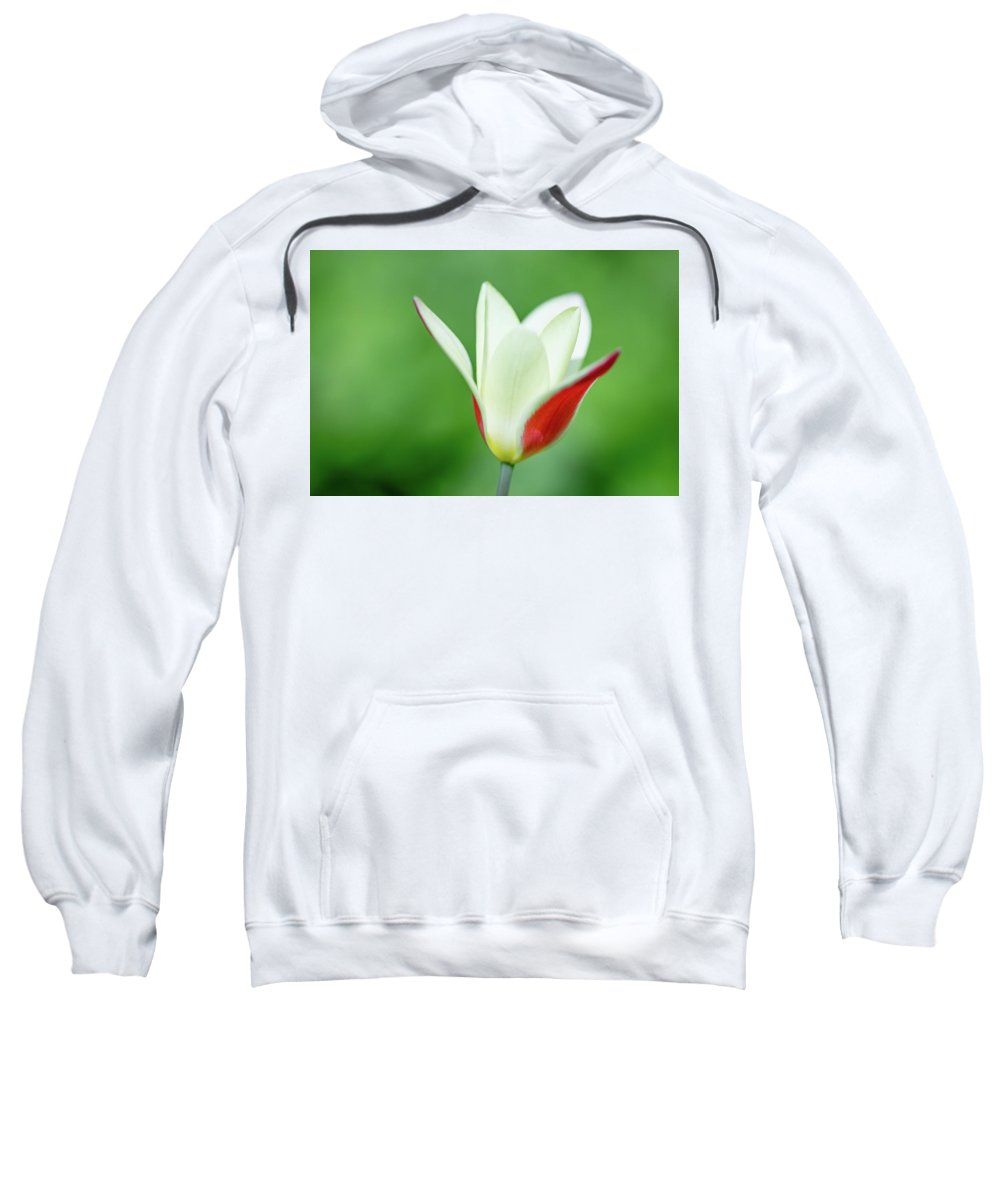 Tulip Sweatshirt featuring the photograph Lonely Lady Tulip by Jess Kruk