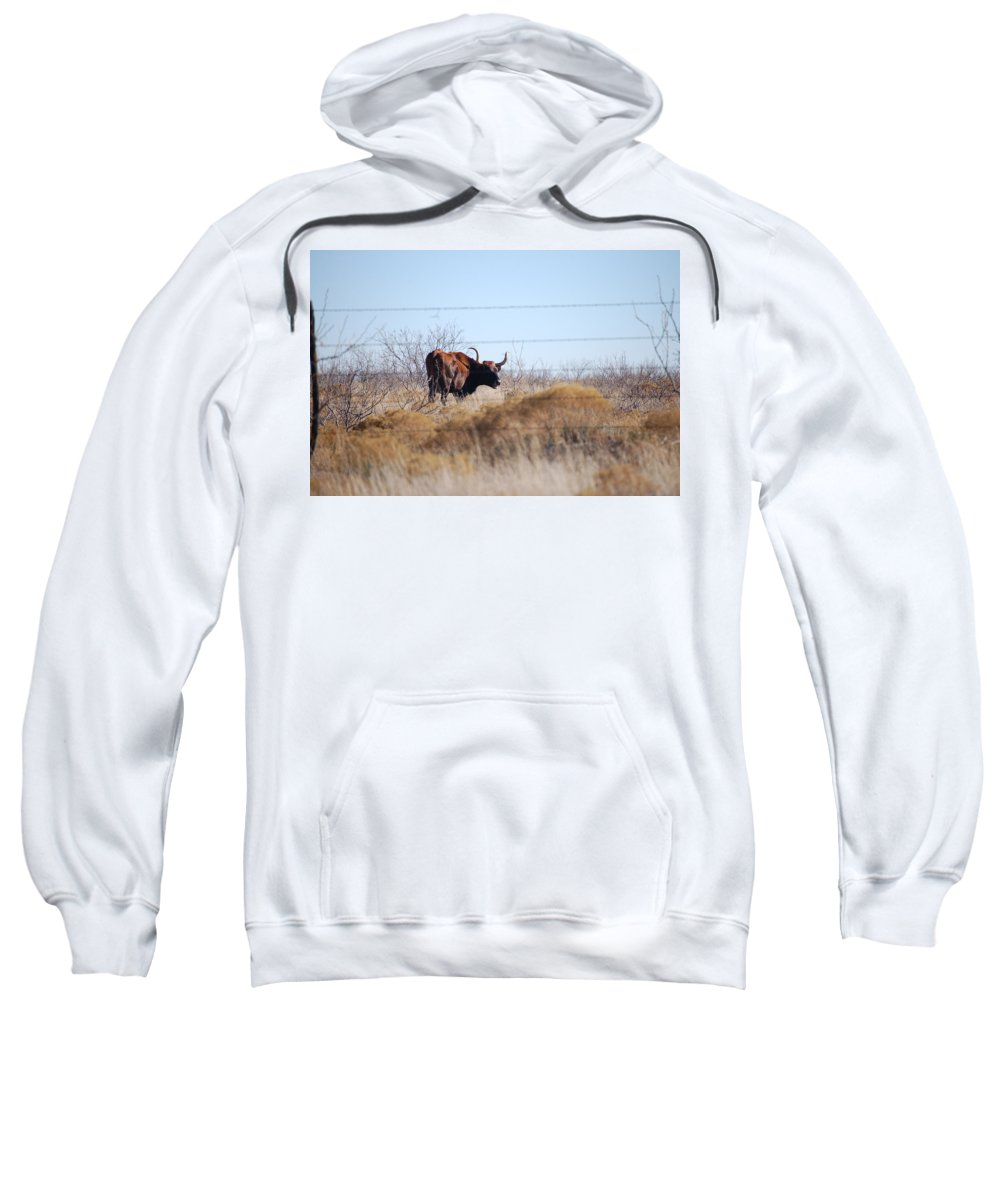 Long Horn Sweatshirt featuring the photograph Long Horn by Lucy Bounds
