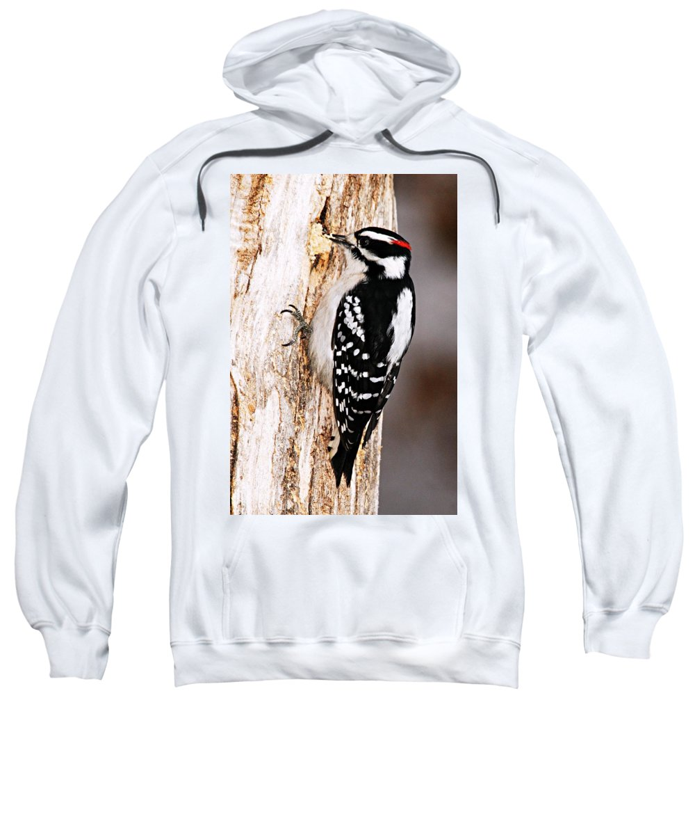 Photography Sweatshirt featuring the photograph Male Hairy Woodpecker by Larry Ricker