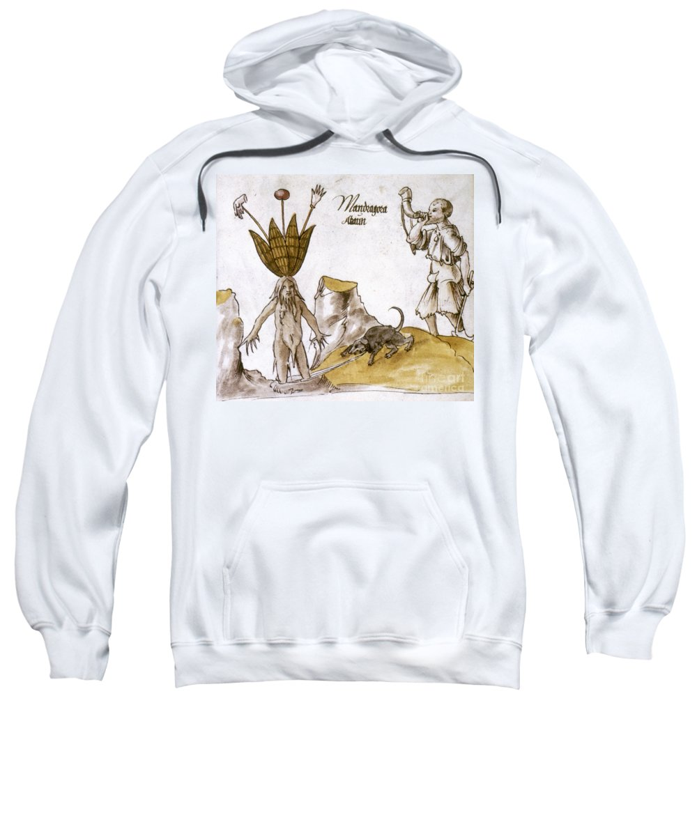 1500 Sweatshirt featuring the photograph Mandrake And Herbalist by Granger