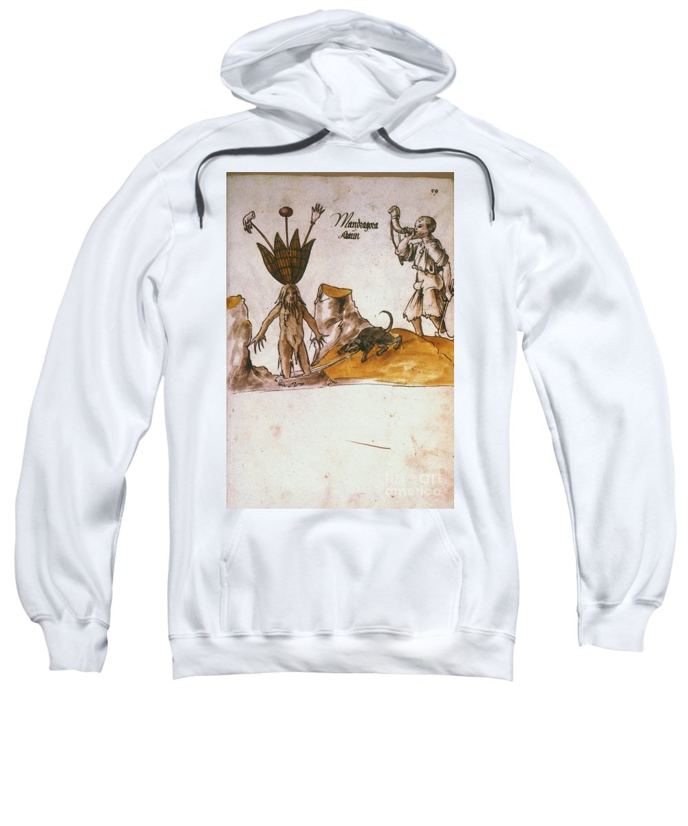 1500 Sweatshirt featuring the photograph Mandrake, C1500 by Granger