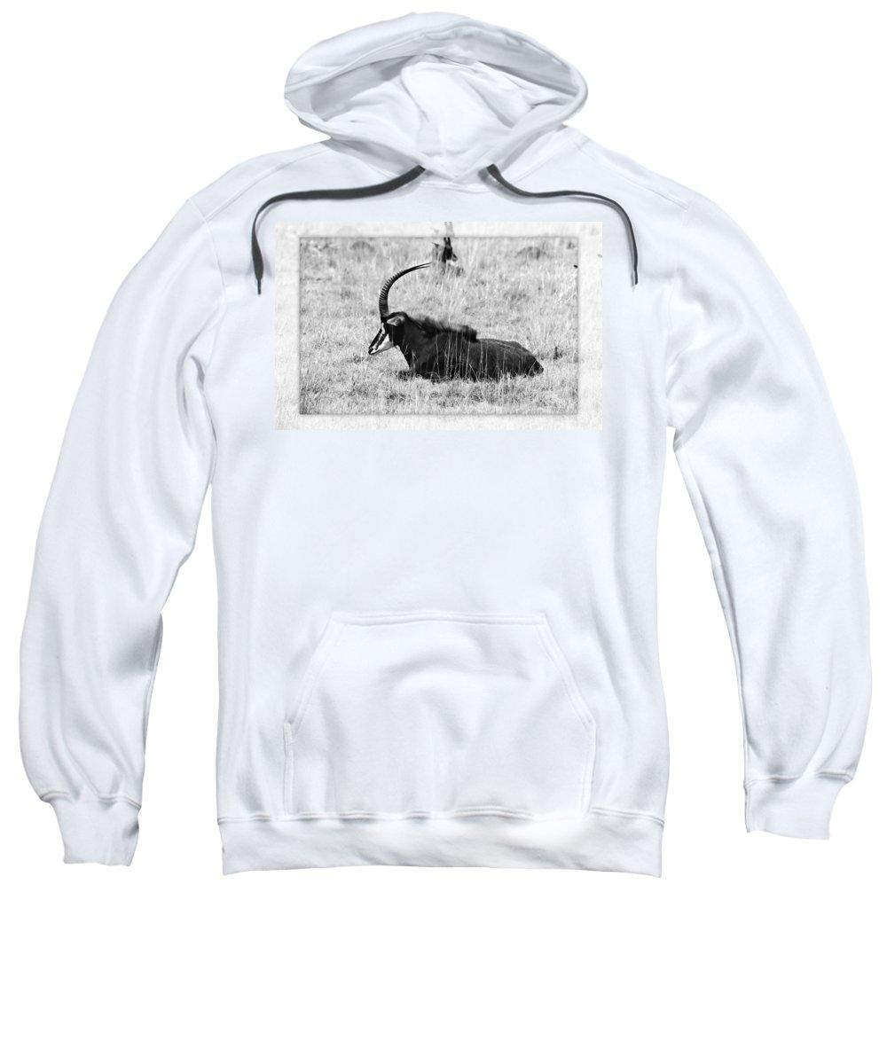 Sable Sweatshirt featuring the photograph Mbarapi by Douglas Barnard
