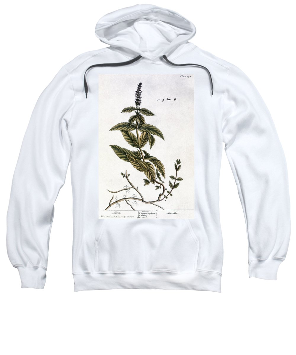 1730s Sweatshirt featuring the photograph Mint Plant, 1735 by Granger